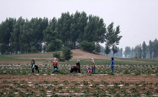 辽宁超千万亩农田受旱