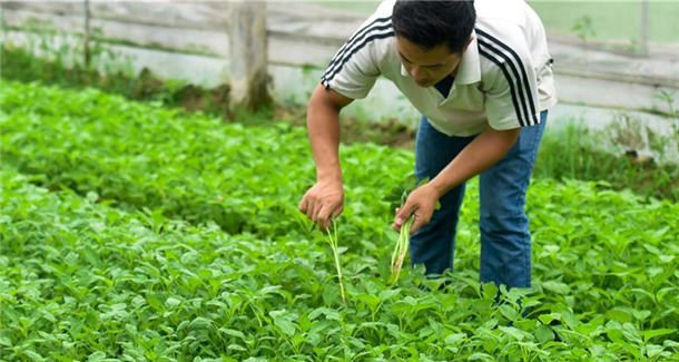 从田间到菜篮——供港蔬菜的跨境之旅