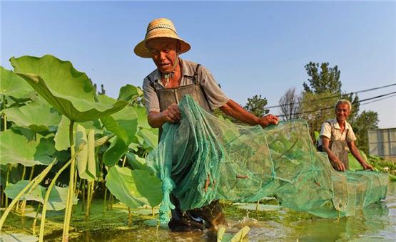 河北临西县:特色生态种养模式助农脱贫