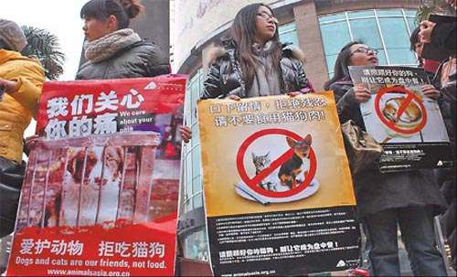 Environmentalists in Wuhan, Hubei province, stage a demonstration against the habit of eating dogs, holding placards that read 'dogs and cats are our friends, not food'.
