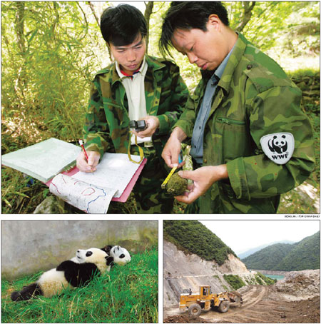 Scientists counting on panda census