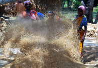 Tribal women husk paddy at a local farm. Though government has numerous assistance scheme for the tribal people, their life style remain unchanged due to their reluctance to education.
