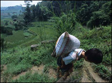 Rural China in 1990s