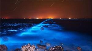 Sea turns blue with algae