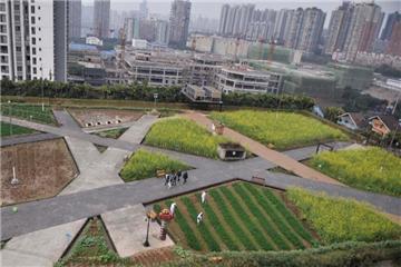 Rooftop farming in Chongqing