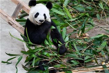 Animals winter at NE China park