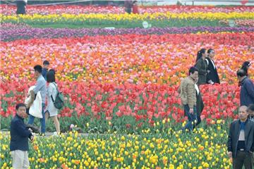Tourists enjoy tulip blossoms in C China's Hunan