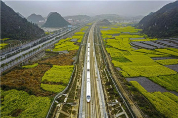 High-speed train runs along cole flowers