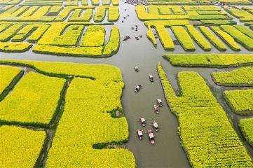 Tourists enjoy scenery of cole flowers on boats in east China's Jiangsu