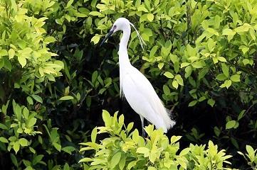 Egrets in S China's Hong Kong