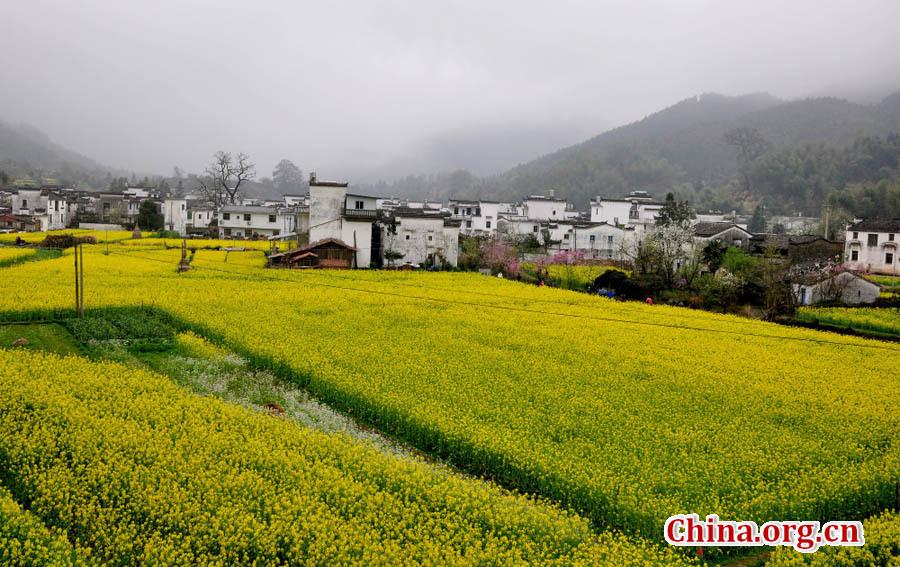 Beautiful spring scene - Wuyuan
