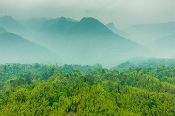 Aerial view of Bamboo Forest Park in SW China