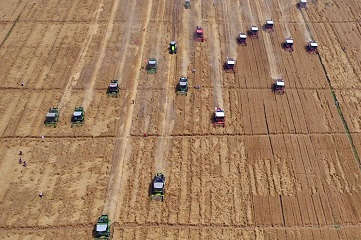 Farmers harvest wheat across China