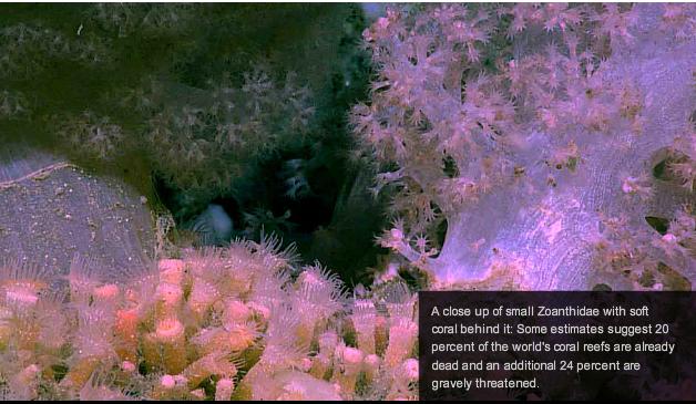 科学家在北大西洋发现深海神秘未知生物(组图) - Tiger - 一杯绿茶