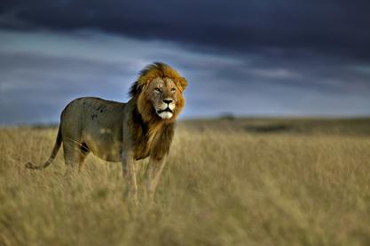 (图片由世界动物保护协会提供)