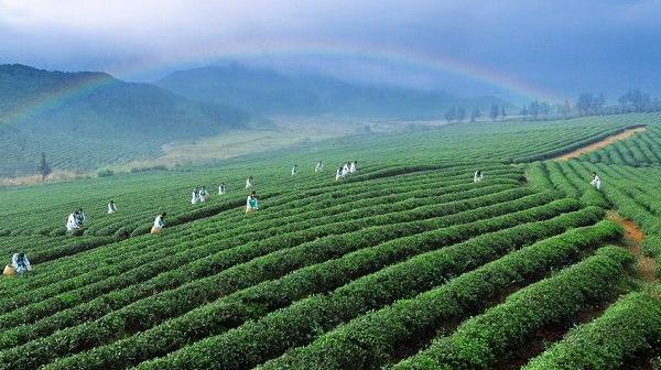 朱立志谈农业发展中的创新驱动