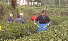 贵州铜仁:四年时间让1565个贫困村全部出列