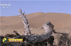 【镜头中的脱贫故事】陈宁布:脱贫致富的农牧民