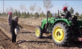 镜头中的脱贫故事:吉祥甘草产业示范园 沙漠里的春耕