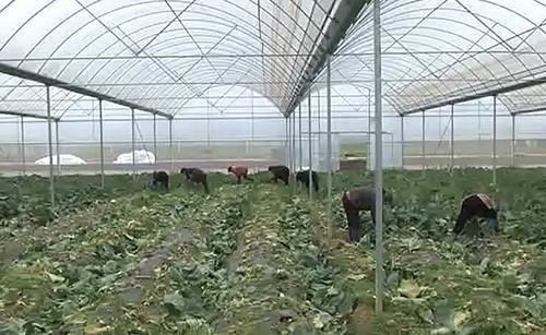 江西省贛州市興國縣:現代農業助推脫貧攻堅