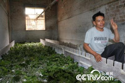 廖边泽说,虽然养蚕辛苦,但是价格好,有钱赚心里就高兴。(孔华/图)