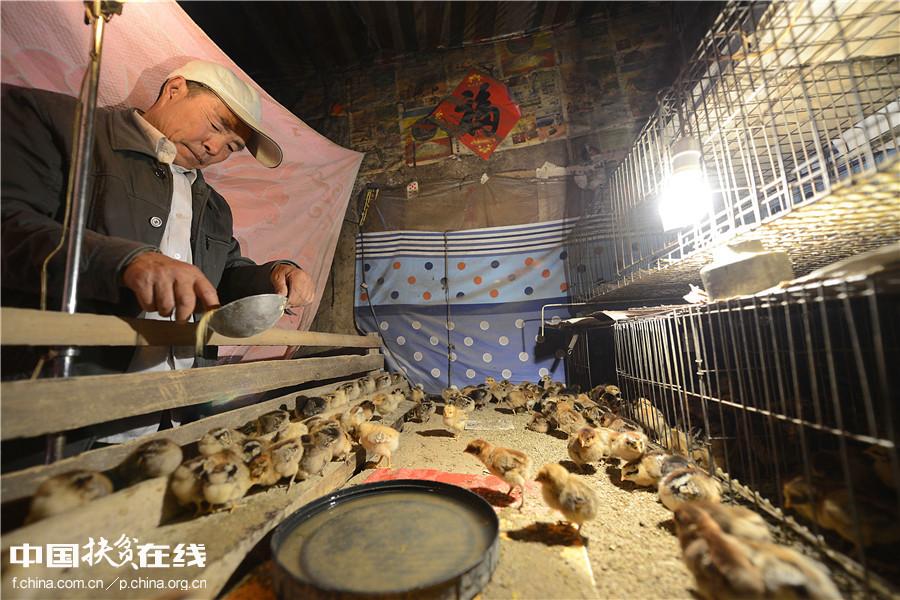 【镜头中的脱贫故事】农民把热炕让给小鸡