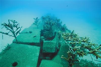 """""""一个岛礁没有珊瑚礁,就像一个山头没有树林……"""""""