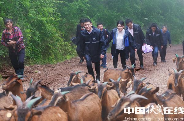 中国工商银行在南江开展黄羊产业精准扶贫项目