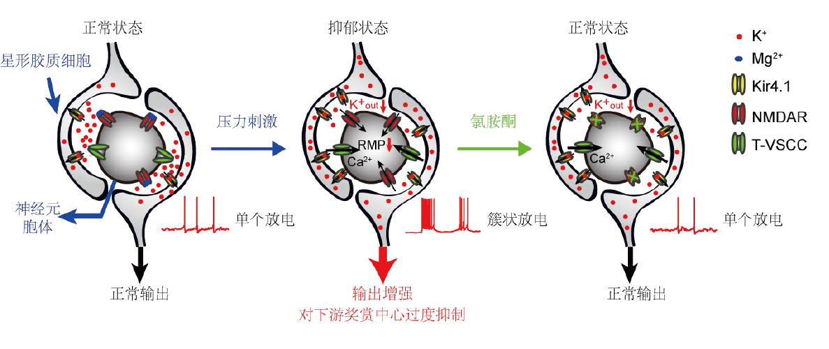 2018年度中国科学十大进展