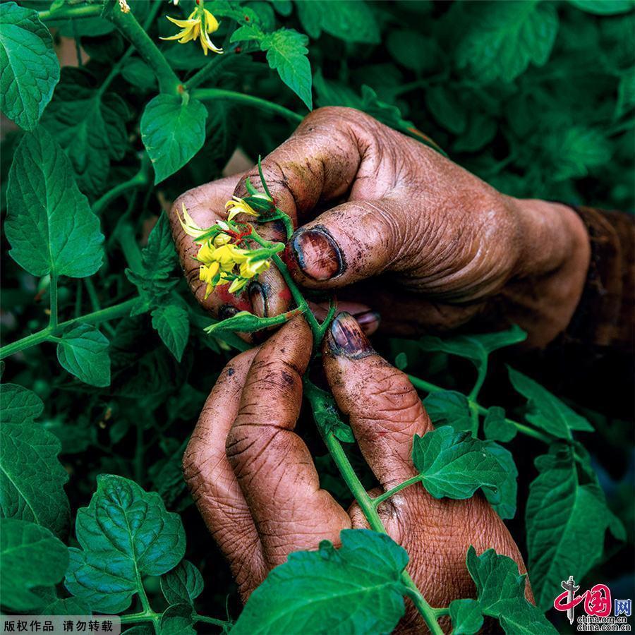第五届中国蔬菜摄影大赛评选揭晓(附名单)