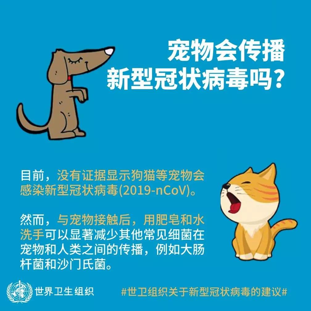 新型冠状病毒之世卫组织答疑 宠物会传播吗